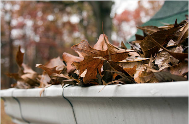 brown leaves clogging gutter
